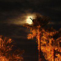 image 4157-palms-and-moon-jpg
