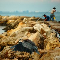 image 4306-bird-and-fisherman-jpg