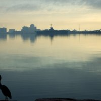 image 5547-tall-bird-skyline-jpg