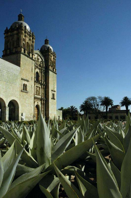 church with agave